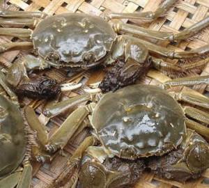 什么样的大闸蟹才是正宗的固城湖螃蟹