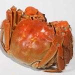 2011年高淳螃蟹养殖情况