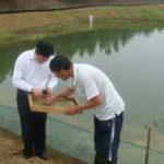 2010年高淳螃蟹养殖户忙着投放固城湖蟹苗