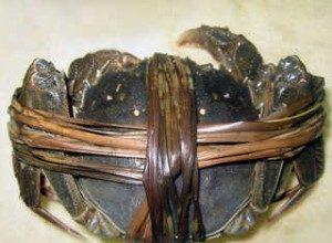 2010年固城湖螃蟹价格回顾